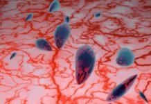 Tagmedicina, toxoplasmosi
