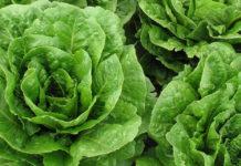 #tagmedicina,insalata