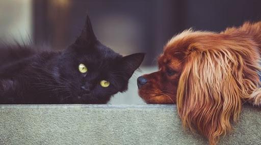 #tagmedicina,animali