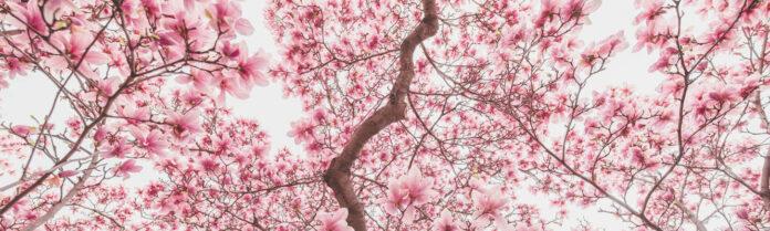 tagmedicina,Magnolia