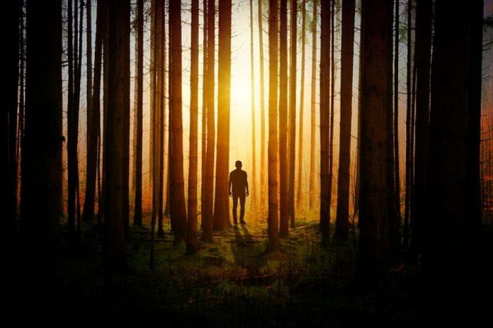 tagmedicina,foresta
